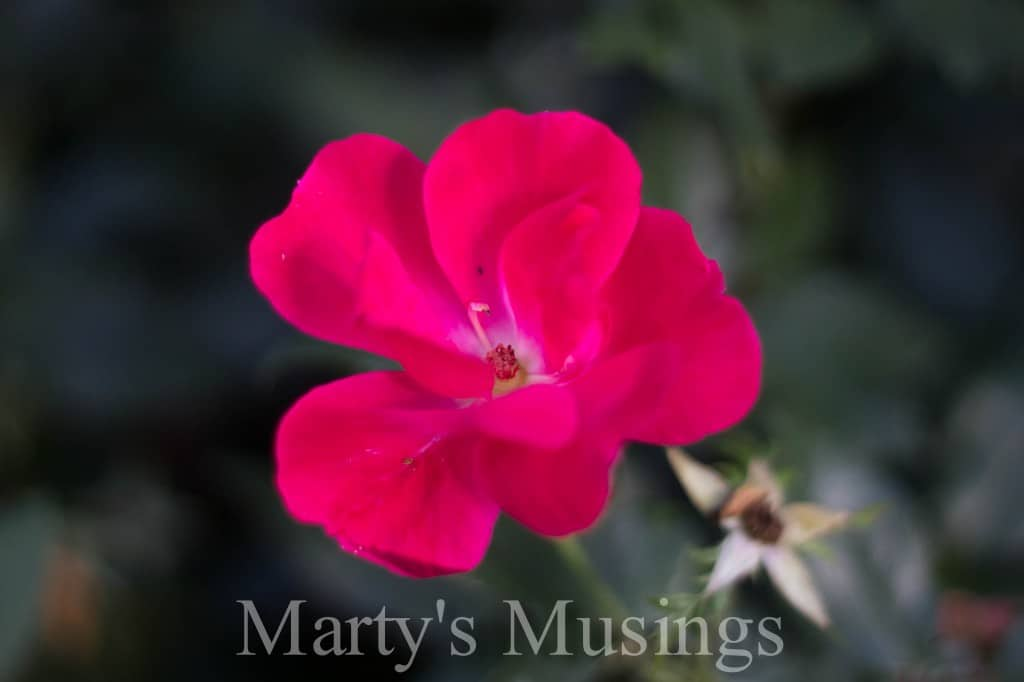 Photo of bright pink flower petals on a green background