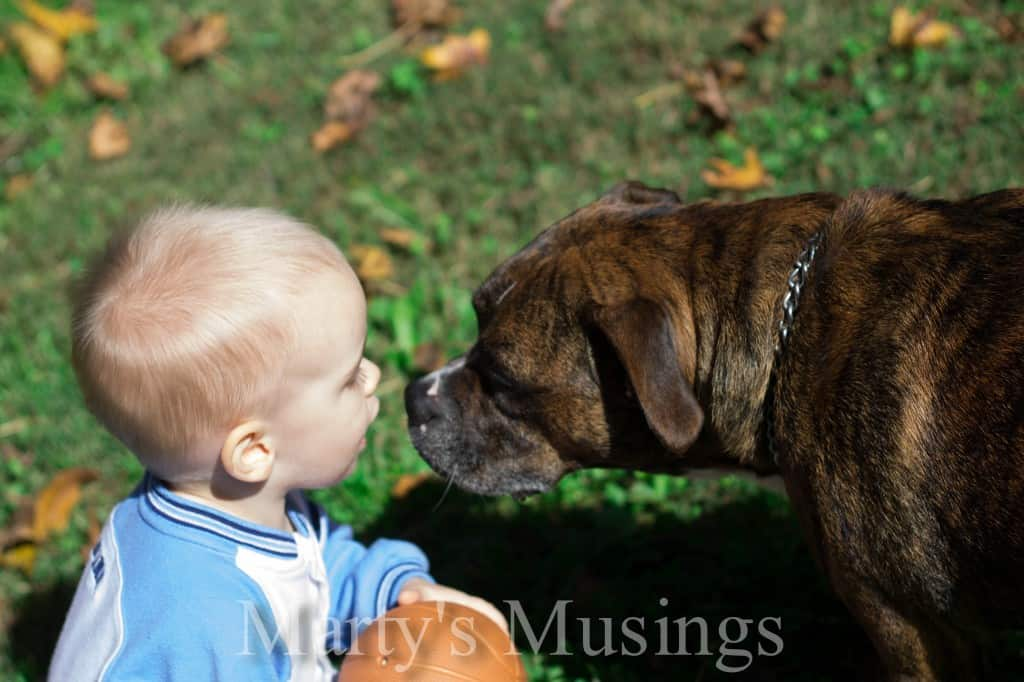 Dog Kisses Little Boy