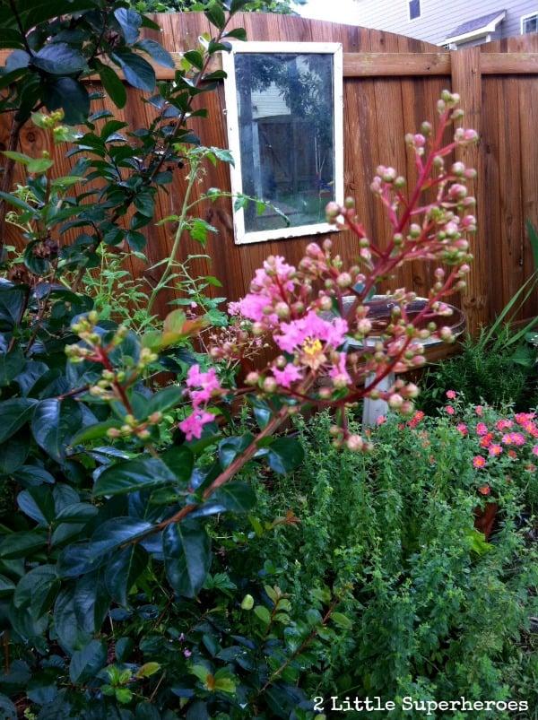 garden-mirror