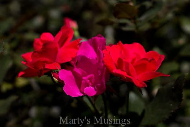 Mandisa Overcomer Song and Devotion