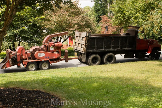 Tree Removal- Part One of Our Dream Deck from Marty's Musings