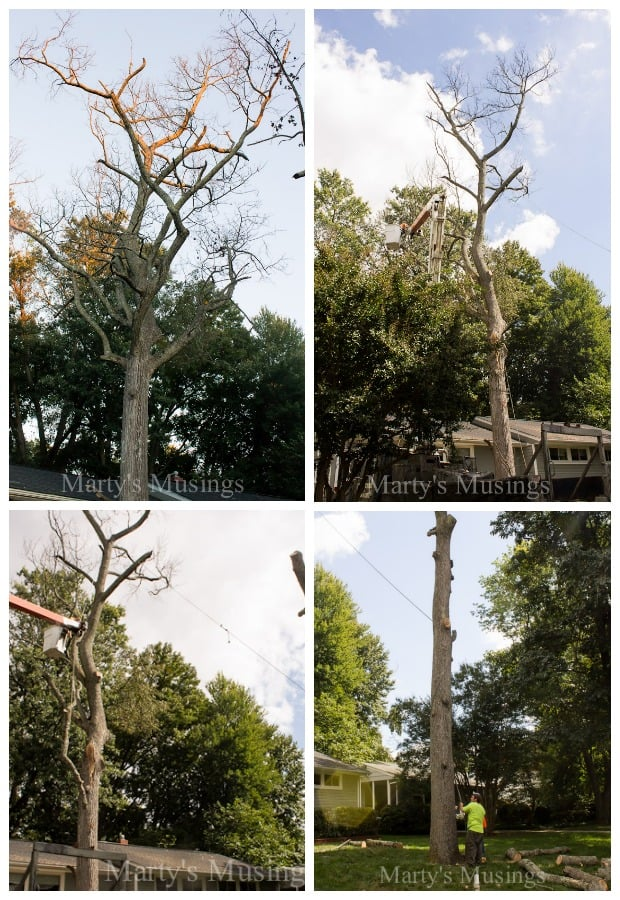 Tree Removal- Part One of Our Dream Deck from Marty's Musings.jpg