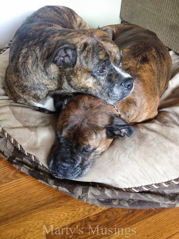 Purina One Dog Food - Marty's Musings #OneDifference #PMedia #ad
