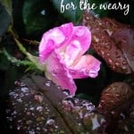 Encouraging Words for the Weary - Marty's Musings