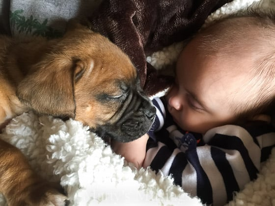 Ever wondered why southerners fear of running out of bread and milk when it snows? Marty's Musings tells why and shows you cute puppy pictures, too!