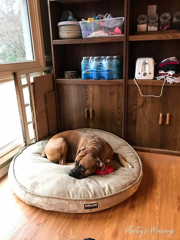 home remodeling tips for you and your dog