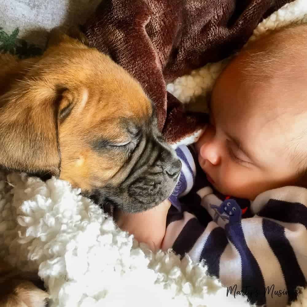 baby and puppy snuggled together