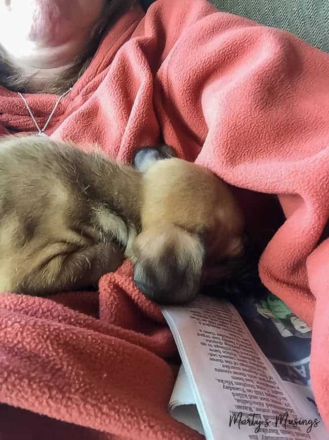puppy snuggled under mom's arm